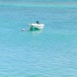 Barque - Fuerte Ventura