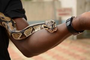 Temple des pythons Ouidah - Que faire au Bénin