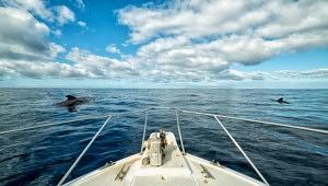 voir des baleines a tenerife