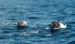 voir des baleines a tenerife - dauphins - librevoyageur