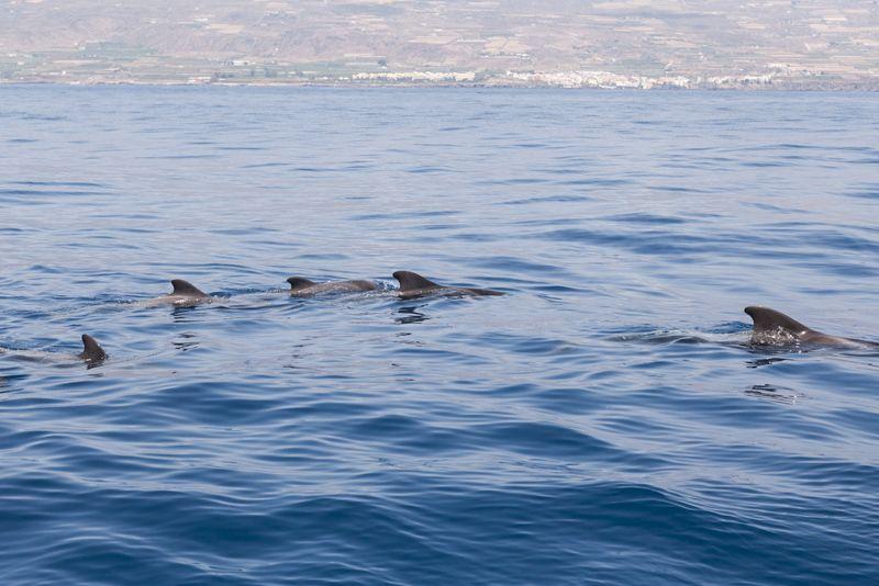 voir baleines a tenerife