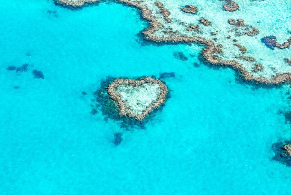 récif coeur - heart reef