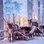 Que faire à Rovaniemi : toutes les activités en Laponie finlandaise !