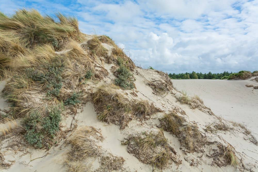 dunes Cayeux-Sur-Mer
